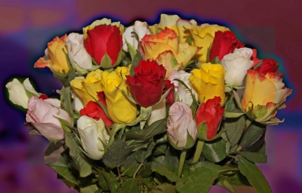 Blandede roser