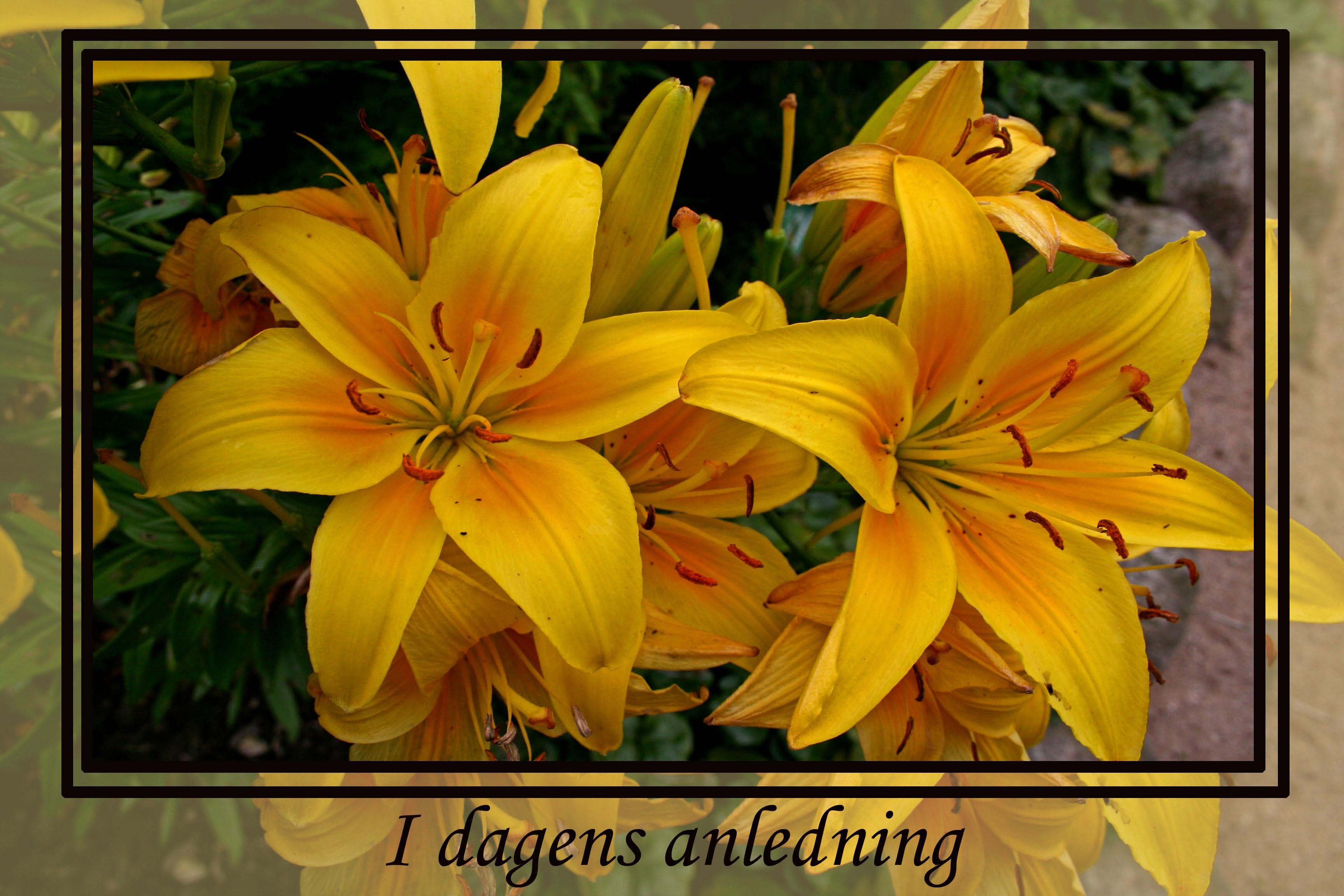 Kort Gule blomster I dagens anledning