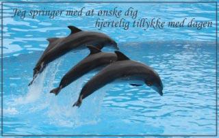 Kort hjertelig tillykke delfiner