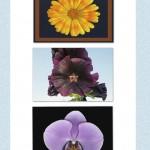 5 x blomst