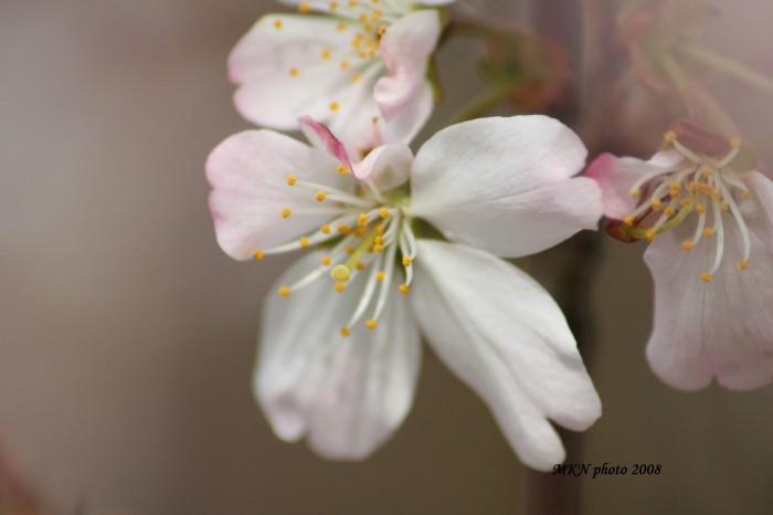 Appeltrees