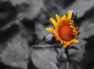 Gul blomst på sort 2