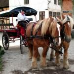 HorseTaxi