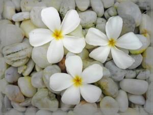Hvide blomster på stranden