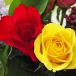Rød og gul