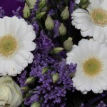 Hvid og lilla